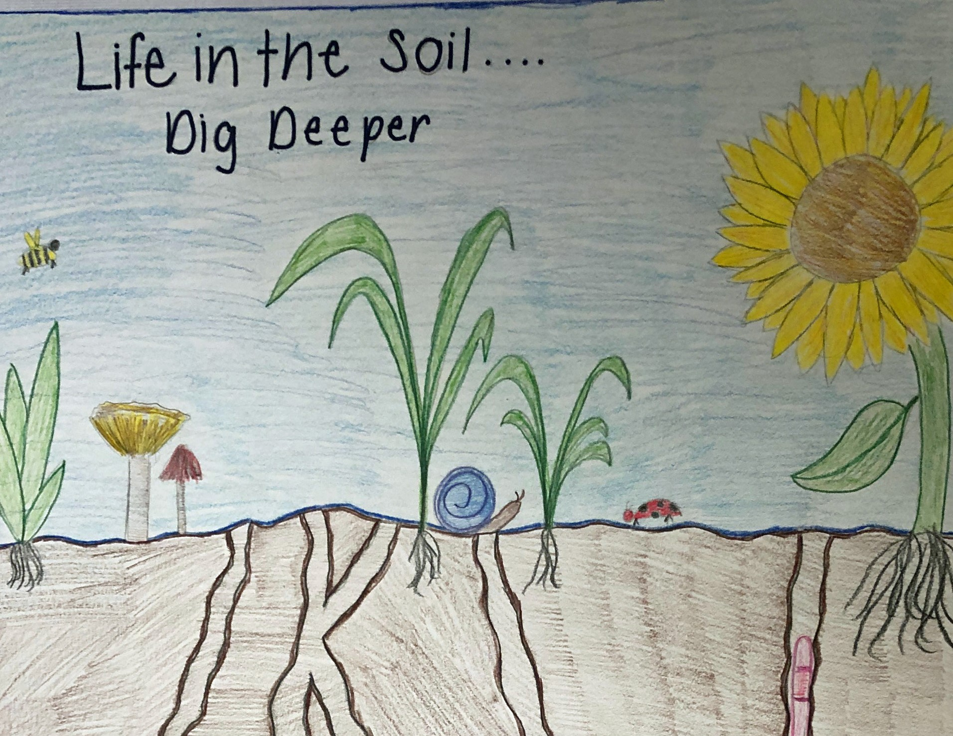 Life in the Soil: Dig Deeper   South Carolina Wild